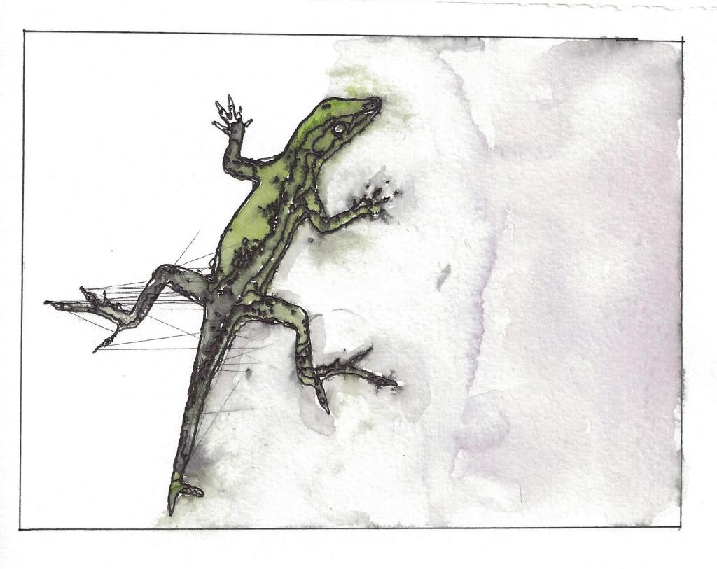 Puerto Rican Gecko